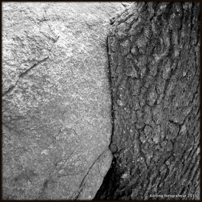 Sten möter träd körling fotograferar 2013