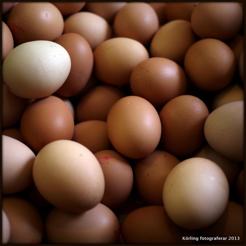 Körling fotograferar ägg 2013