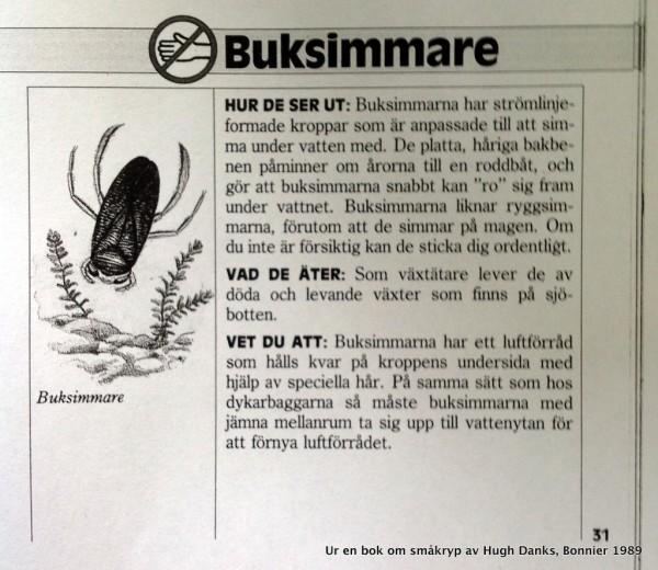 Buksimmare no 1